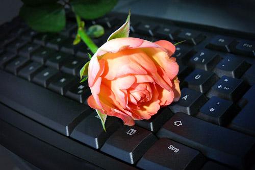 Tastatur mit Rose - E-Mail-Lovestory (c) Rosel Eckstein / PIXELIO