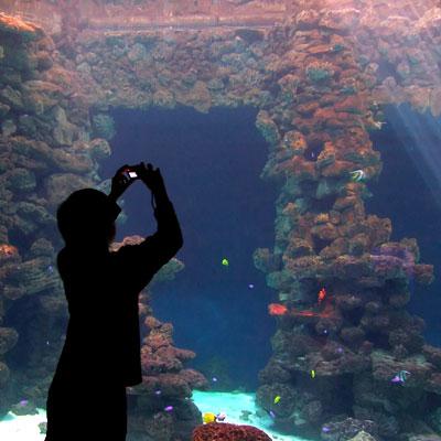 Fotografie Silhouette vor Aquarium (c) Ernst Rose / PIXELIO