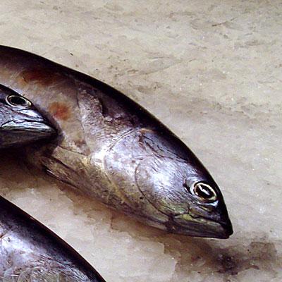 Fisch(c)TiM-Caspary/PIXELIO
