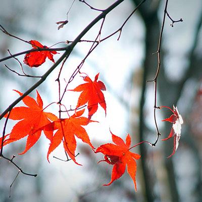 Herbstblaetter(c)jamie84/SXC