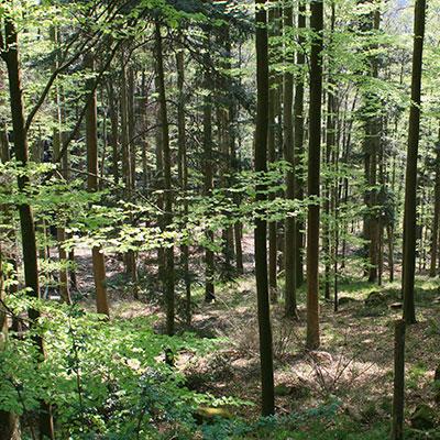 Wald(c)ezagury/SXC