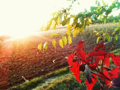 Rote Blätter in der untergehenden Herbstsonne / made with Cam+